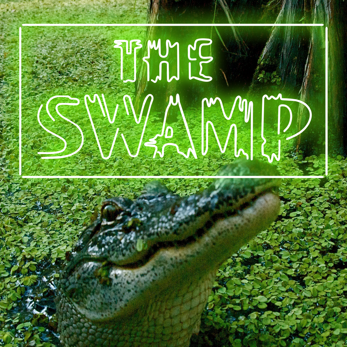 the swamp on bourbon street